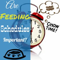 Things To Consider About A Dogs Feeding Schedule