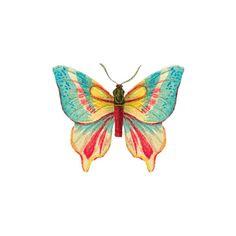Tattly Butterfly 2 Tattoo
