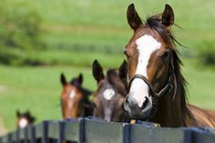 Horse Ranch Royalty Free Stock Images