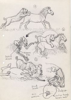 Smilodon hunting sequence sketch 1 (150)