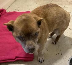 Is This Your Dog Orrock Corgi Terrier Mix Male Date Found 10 19 2019 Breed Of Dog Corgi Terrier Mix Gender Male Closest Intersection 170th 24 Hunde