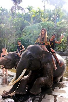 Swimming with elephants in Bali