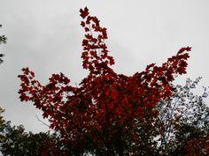 Six Mile Lake Provincial Park Ontario Canada - Autumn Ontario Camping, Canada, Autumn, Park, Fall, Parks
