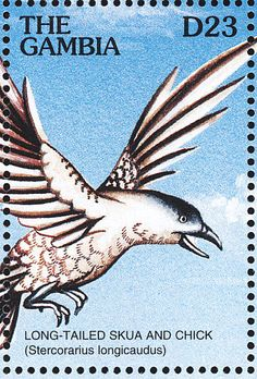 Long-tailed Jaeger stamps - mainly images - gallery format