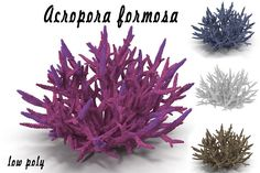 Acropora formosa low poly by AndrewWhite on @creativemarket