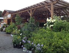 Our shade house. Shade House, Pergola, Shades, Outdoor Structures, Garden, Garten, Outdoor Pergola, Lawn And Garden, Gardens