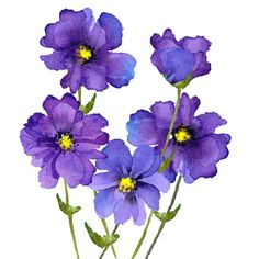 Our key principles are Fairness, Ability, Creativity, Trust and that's a F. Watercolor Flowers, Watercolor Paintings, Watercolour, Flower Crafts, Flower Art, Happy Flowers, Purple Flowers, Flower Pictures, Flower Wallpaper