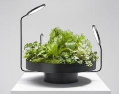 optimale zimmerpflanzen pflege mini garten licht bewässerung
