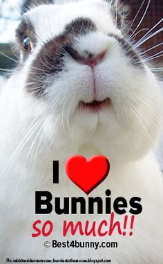 So much to love about bunnies! www.best4bunny.com