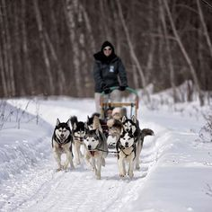 eskimos and dog sleds Travel Activities, Summer Activities, Outdoor Activities, Ottawa Valley, Canada National Parks, Big Country, Cool Boots, Trip Advisor, Sled Dogs