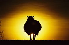 The Sheep by More Altitude, via Flickr