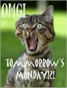 BSPW.ME.....HEY.....The cat is right...... #WAD_DA_FAQ.......?????
