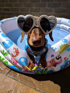 My funny little man! #dachshund