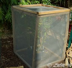 Butterfly/Caterpillar Enclosure with plant
