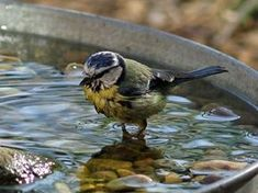 How to make a bird bath. I love this. How wonderful just to watch the birds!
