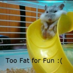 awwww poor little fat mouse can't fit in the slide!!