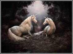 Unicorn lovers