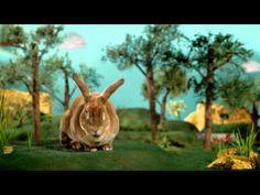 Adele the Agility Rabbit for Purina Small Animal food