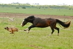 Horse and dog.