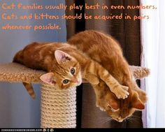 Fun Cat Facts #32  THIS IS TRUE...XOXO