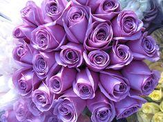Google Image Result for http://bessemercityflorist.files.wordpress.com/2011/10/roses_purple4.jpg