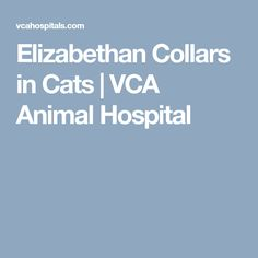 Elizabethan Collars in Cats | VCA Animal Hospital