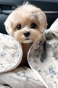 Super Cute Puppies, Cute Little Puppies, Cute Little Animals, Cute Dogs And Puppies, Cute Funny Animals, Cutest Dogs, Doggies, Cute Baby Dogs, Bulldog Puppies