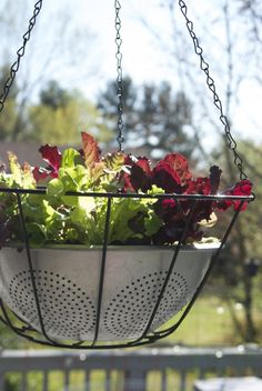 What a lovely idea. Keep your eyes peeled for an old colander---we can start sowing lettuce again here in September.