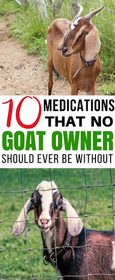A well stocked medical cabinet can mean the difference between life and death. Here are 10 goat medications that no goat owner should ever be without. Keeping them on hand equals a happy healthy herd! Raising Goats   Goat Care   Raising Goats for Beginners   Goat Health