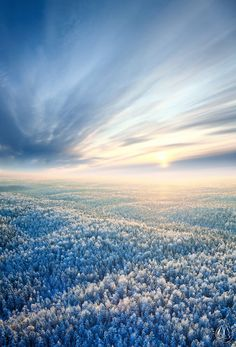 Aerial view of winter forest during sunset