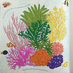 Image Result For Animal Kingdom Colouring Book Coral