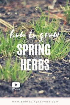 Grow these 5 early Spring Herbs you can plant in your garden today for an easy homegrown food sooner! Gardening For Beginners, Gardening Tips, Herb Garden Design, Garden Ideas, Cooking Herbs, Organic Gardening, Sustainable Gardening, Vegetable Gardening, Gardening Supplies