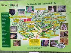 Bon Voyage Friends : Travel Tuesday- New Forest Wildlife Park http://bonvoyagefriends.blogspot.com/2014/11/travel-tuesday-new-forest-wildlife-park.html