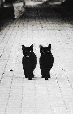 #blackcats