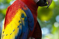 El Manantial Macaw Sanctuary, Buenos Aires, Costa Rica