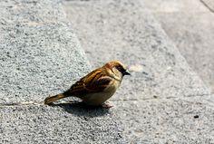 Pajaro, ave, alas, gris, pajarito, plumas, Bird, wings, gray, feathers, animales, animals