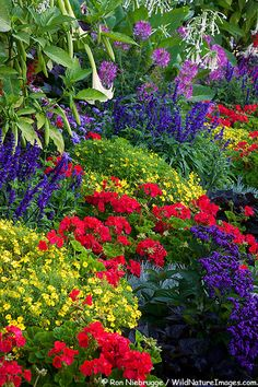 Photo of Downtown Victoria  Colorful flower beds can be found throught the Inner Harbour area and downtown Victoria, Vancouver Island, British Columbia, Canada
