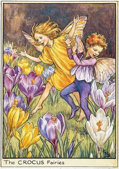 Illustration for the Crocus Fairies from Flower Fairies of the Spring. A boy and a girl fairy run across a field which is covered with crocuses. This illustration originally appeared in Flower Fairies of the Garden, 1944.- Cicely Mary Barker  300.1.1 FF82wc Spring 1 1944