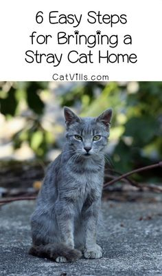 Thinking about bringing a stray cat home? There are important things to do first! Check out these six steps to take before you do it.