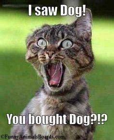 Bought Dog