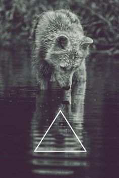 Triangle, the strongest shape. And a wolf, the most badass creature.