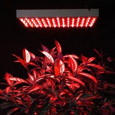 225 Red LED Panel Hydroponic Indoo Grow Light System 225 LED Panel For Sale https://ledgrowlightplant.info/225-red-led-panel-hydroponic-indoo-grow-light-system-225-led-panel-for-sale/