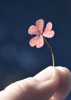 Tiny Wonders by Cara Jill Smith, via 500px