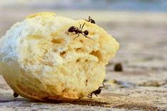 Do you have ants bothering you? We have listed some very effective ways for you to get rid of all the ants in your home or garden and take full control of your sur… Borax Cleaning, Diy Home Cleaning, Bathroom Cleaning Hacks, Household Cleaning Tips, Deep Cleaning Tips, House Cleaning Tips, Diy Cleaning Products, Cleaning Solutions, Cleaning Supplies