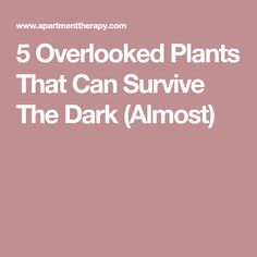 5 Overlooked Plants That Can Survive The Dark (Almost)