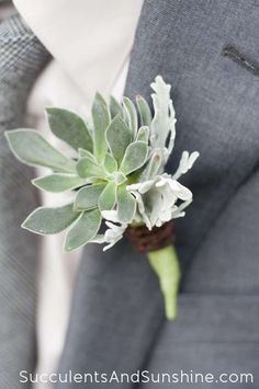 Succulent Boutonniere - Succulents and Sunshine