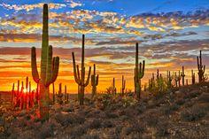 Sunset in Sonoran Desert Canvas Print, Arizona Wall Art, Cactus Canvas Nature Wall Art Desert Sunset Photo, Large Desert Wall Art Desert Road, Desert Sunset, Tucson Sunset, Desert Places, Arizona Travel, Sedona Arizona, Phoenix Arizona, All Nature, Amazing Nature