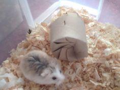 DIY Hamster Toys because i'm a geek!