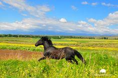 Mendoza, Social, Html, Horses, Animals, Travel Tours, Adventure Travel, Screensaver, Sailing Ships