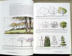 Simple rough sketches of trees for sections or elevations.